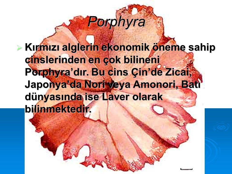 Porphyra  Kırmızı alglerin ekonomik öneme sahip cinslerinden en çok bilineni Porphyra'dır. Bu cins Çin'de Zicai, Japonya'da Nori veya Amonori, Batı d