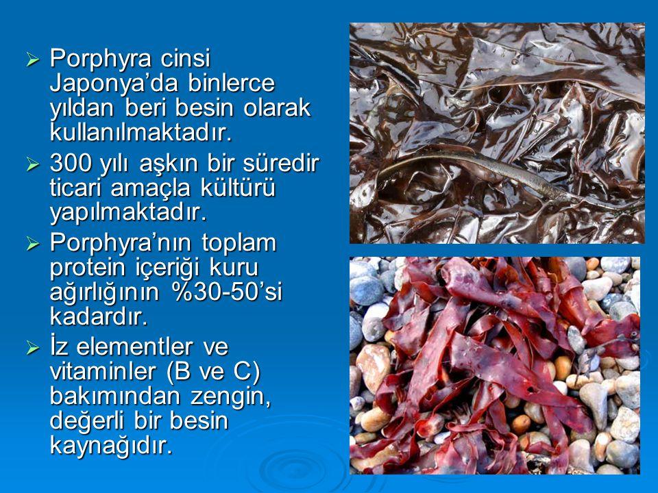  Porphyra cinsi Japonya'da binlerce yıldan beri besin olarak kullanılmaktadır.  300 yılı aşkın bir süredir ticari amaçla kültürü yapılmaktadır.  Po