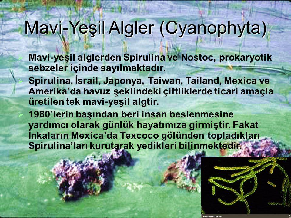 Mavi-Yeşil Algler (Cyanophyta)  Mavi-yeşil alglerden Spirulina ve Nostoc, prokaryotik sebzeler içinde sayılmaktadır.  Spirulina, İsrail, Japonya, Ta