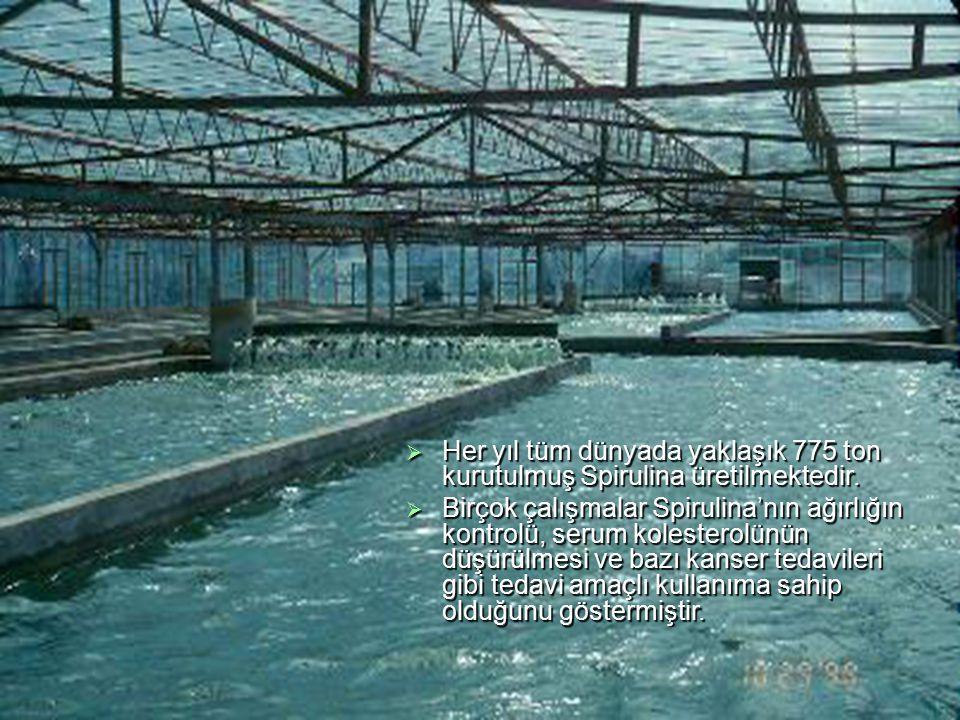  Her yıl tüm dünyada yaklaşık 775 ton kurutulmuş Spirulina üretilmektedir.  Birçok çalışmalar Spirulina'nın ağırlığın kontrolü, serum kolesterolünün