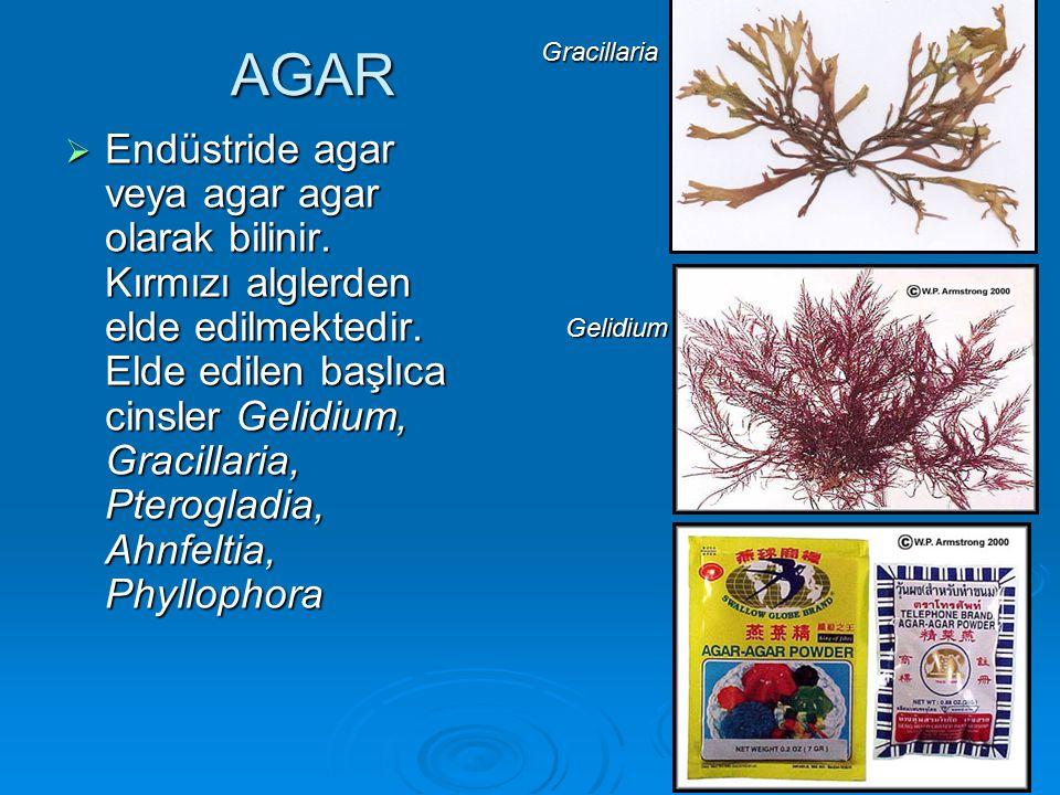 AGAR  Endüstride agar veya agar agar olarak bilinir. Kırmızı alglerden elde edilmektedir. Elde edilen başlıca cinsler Gelidium, Gracillaria, Pterogla