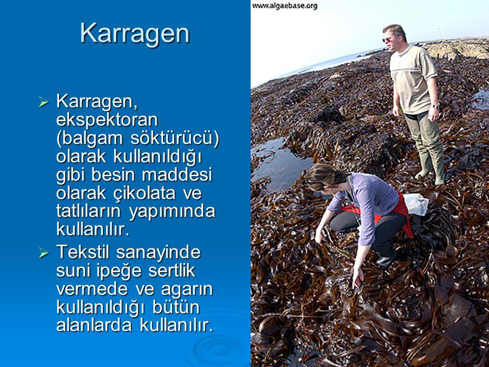 Karragen  Karragen, ekspektoran (balgam söktürücü) olarak kullanıldığı gibi besin maddesi olarak çikolata ve tatlıların yapımında kullanılır.  Tekst