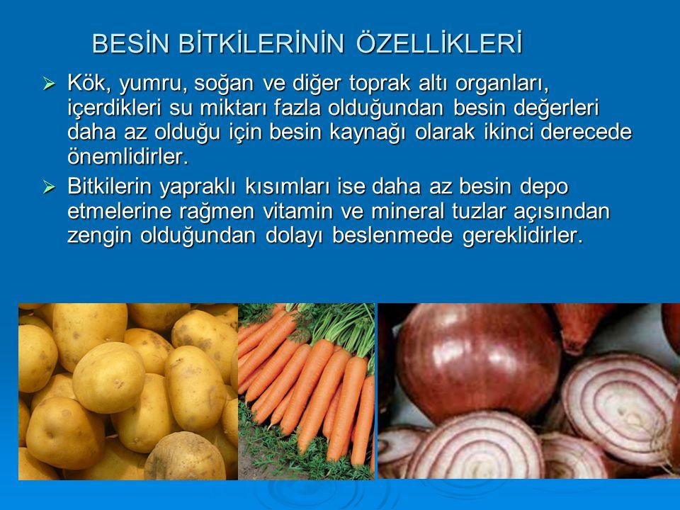  Kök, yumru, soğan ve diğer toprak altı organları, içerdikleri su miktarı fazla olduğundan besin değerleri daha az olduğu için besin kaynağı olarak i
