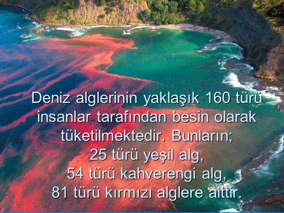 Deniz alglerinin yaklaşık 160 türü insanlar tarafından besin olarak tüketilmektedir. Bunların; 25 türü yeşil alg, 54 türü kahverengi alg, 81 türü kırm
