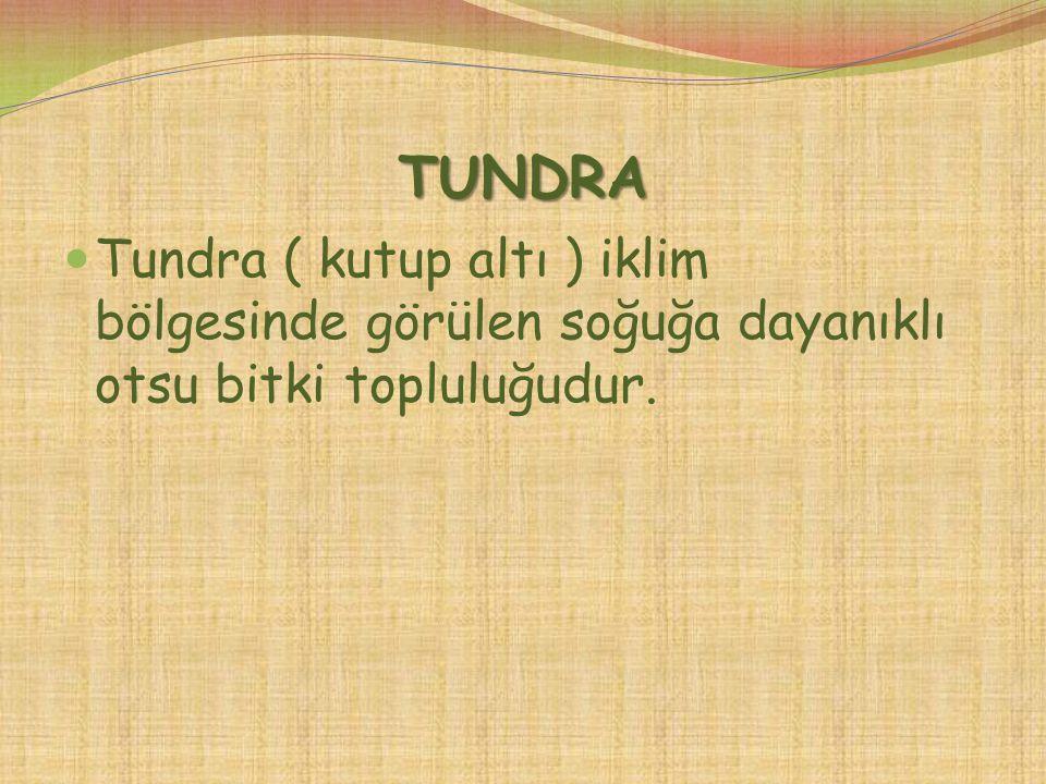 TUNDRA Tundra ( kutup altı ) iklim bölgesinde görülen soğuğa dayanıklı otsu bitki topluluğudur.