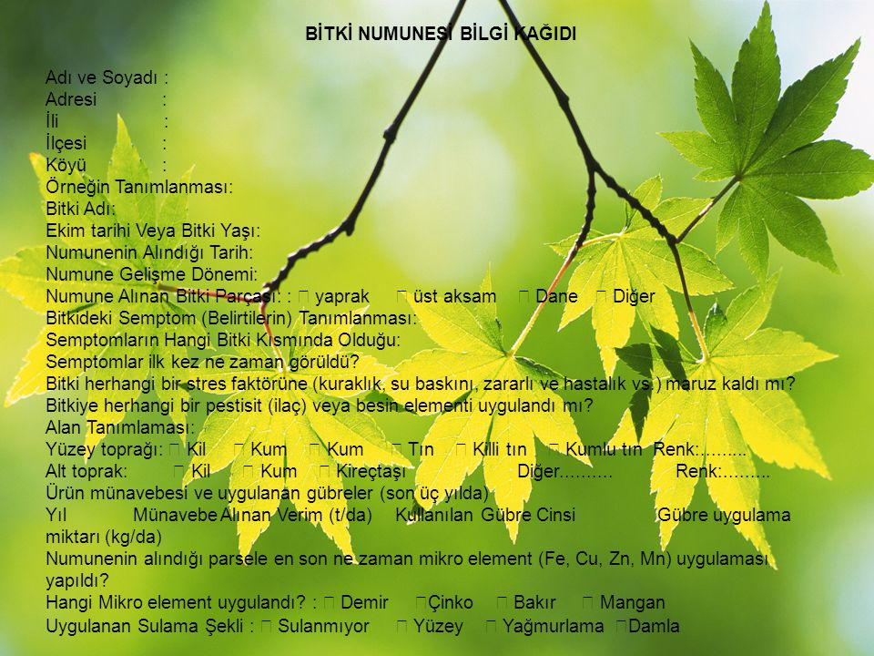 BİTKİ NUMUNESİ BİLGİ KAĞIDI Adı ve Soyadı : Adresi : İli : İlçesi : Köyü : Örneğin Tanımlanması: Bitki Adı: Ekim tarihi Veya Bitki Yaşı: Numunenin Alı