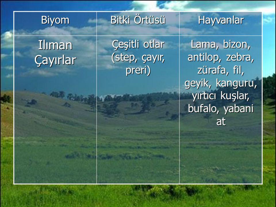 Biyom Bitki Örtüsü Hayvanlar Ilıman Çayırlar Çeşitli otlar (step, çayır, preri) Lama, bizon, antilop, zebra, zürafa, fil, geyik, kanguru, yırtıcı kuşlar, bufalo, yabani at