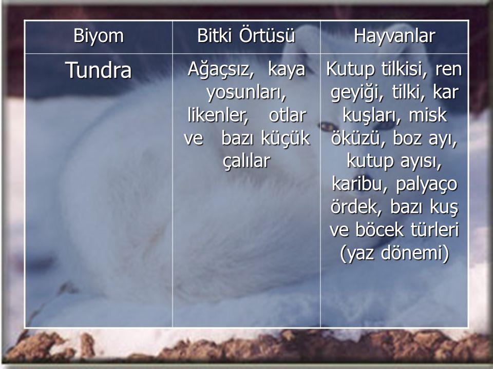 Biyom Bitki Örtüsü HayvanlarTundra Ağaçsız, kaya yosunları, likenler, otlar ve bazı küçük çalılar Kutup tilkisi, ren geyiği, tilki, kar kuşları, misk öküzü, boz ayı, kutup ayısı, karibu, palyaço ördek, bazı kuş ve böcek türleri (yaz dönemi)