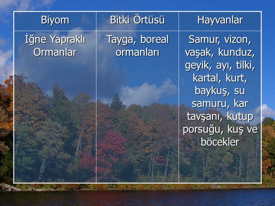Biyom Bitki Örtüsü Hayvanlar İğne Yapraklı Ormanlar Tayga, boreal ormanları Samur, vizon, vaşak, kunduz, geyik, ayı, tilki, kartal, kurt, baykuş, su samuru, kar tavşanı, kutup porsuğu, kuş ve böcekler