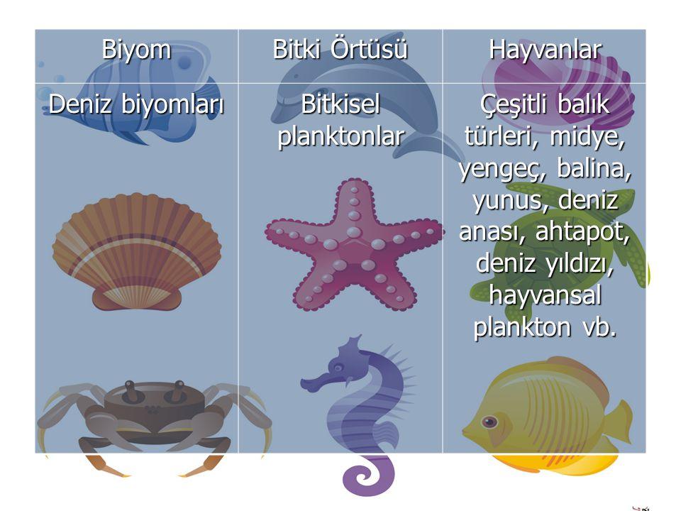 Biyom Bitki Örtüsü Hayvanlar Deniz biyomları Bitkisel planktonlar Çeşitli balık türleri, midye, yengeç, balina, yunus, deniz anası, ahtapot, deniz yıldızı, hayvansal plankton vb.