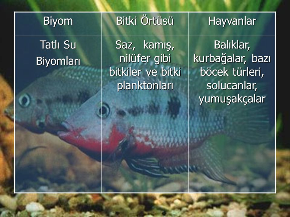 Biyom Bitki Örtüsü Hayvanlar Tatlı Su Biyomları Saz, kamış, nilüfer gibi bitkiler ve bitki planktonları Balıklar, kurbağalar, bazı böcek türleri, solucanlar, yumuşakçalar