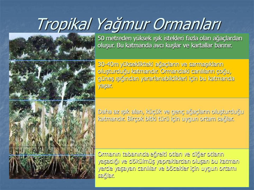 Tropikal Yağmur Ormanları 50 metreden yüksek ışık istekleri fazla olan ağaçlardan oluşur. Bu katmanda avcı kuşlar ve kartallar barınır. 30-40m yüksekl