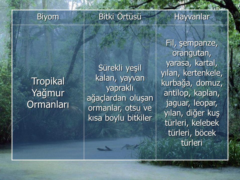 Biyom Bitki Örtüsü Hayvanlar Tropikal Yağmur Ormanları Sürekli yeşil kalan, yayvan yapraklı ağaçlardan oluşan ormanlar, otsu ve kısa boylu bitkiler Fil, şempanze, orangutan, yarasa, kartal, yılan, kertenkele, kurbağa, domuz, antilop, kaplan, jaguar, leopar, yılan, diğer kuş türleri, kelebek türleri, böcek türleri
