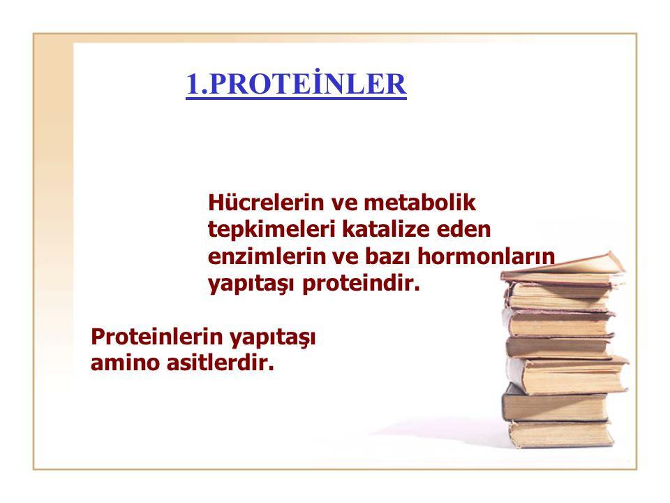 1.PROTEİNLER Hücrelerin ve metabolik tepkimeleri katalize eden enzimlerin ve bazı hormonların yapıtaşı proteindir. Proteinlerin yapıtaşı amino asitler