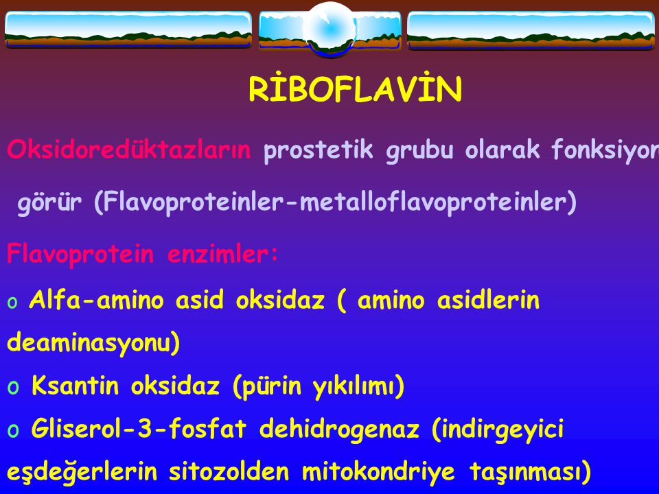 RİBOFLAVİN Oksidoredüktazların prostetik grubu olarak fonksiyon görür (Flavoproteinler-metalloflavoproteinler) Flavoprotein enzimler: o Alfa-amino asi