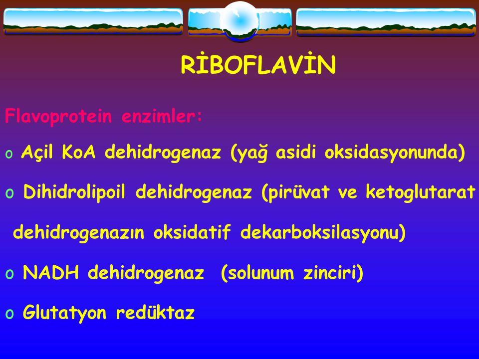 RİBOFLAVİN Flavoprotein enzimler: o Açil KoA dehidrogenaz (yağ asidi oksidasyonunda) o Dihidrolipoil dehidrogenaz (pirüvat ve ketoglutarat dehidrogena