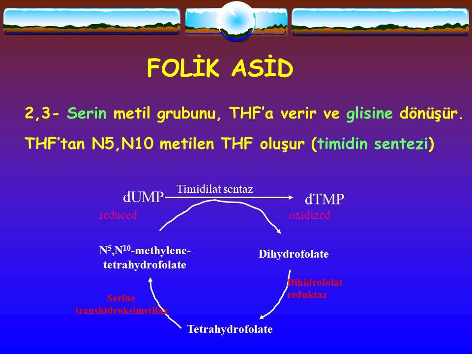 FOLİK ASİD 2,3- Serin metil grubunu, THF'a verir ve glisine dönüşür. THF'tan N5,N10 metilen THF oluşur (timidin sentezi) dUMP dTMP N 5,N 10 -methylene