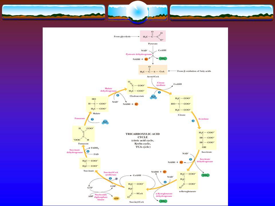 TİAMİN 2- Transketolaz rekasiyonları