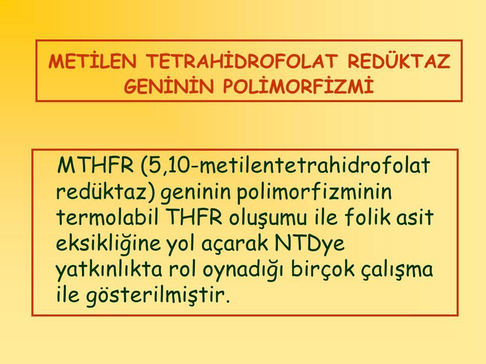 METİLEN TETRAHİDROFOLAT REDÜKTAZ GENİNİN POLİMORFİZMİ MTHFR (5,10-metilentetrahidrofolat redüktaz) geninin polimorfizminin termolabil THFR oluşumu ile