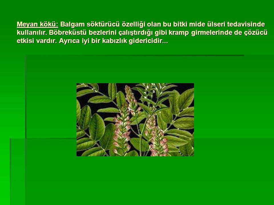 Meyan kökü: Balgam söktürücü özelliği olan bu bitki mide ülseri tedavisinde kullanılır. Böbreküstü bezlerini çalıştırdığı gibi kramp girmelerinde de ç
