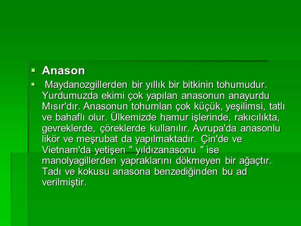 AAAAnason  M M M Maydanozgillerden bir yıllık bir bitkinin tohumudur.