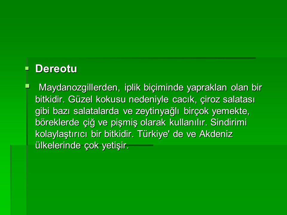DDDDereotu  M M M Maydanozgillerden, iplik biçiminde yapraklan olan bir bitkidir. Güzel kokusu nedeniyle cacık, çiroz salatası gibi bazı salat
