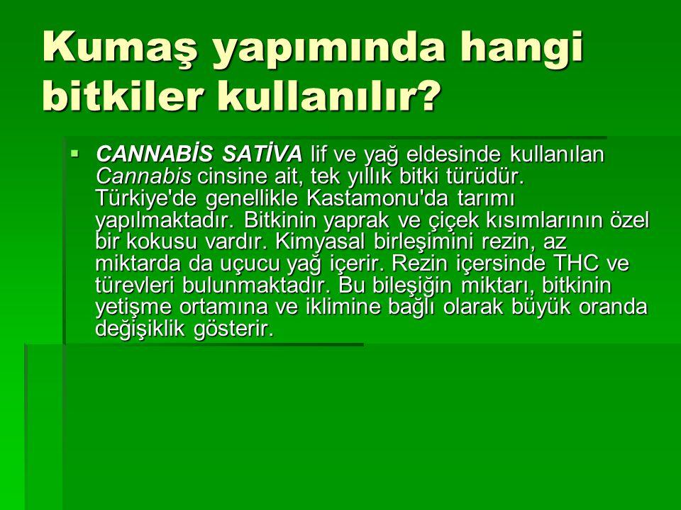 Kumaş yapımında hangi bitkiler kullanılır?  CANNABİS SATİVA lif ve yağ eldesinde kullanılan Cannabis cinsine ait, tek yıllık bitki türüdür. Türkiye'd