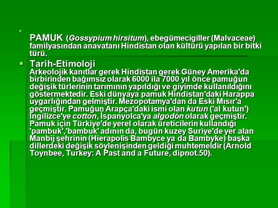  PAMUK (Gossypium hirsitum), ebegümecigiller (Malvaceae) familyasından anavatanı Hindistan olan kültürü yapılan bir bitki türü.  Tarih-Etimoloji Ark