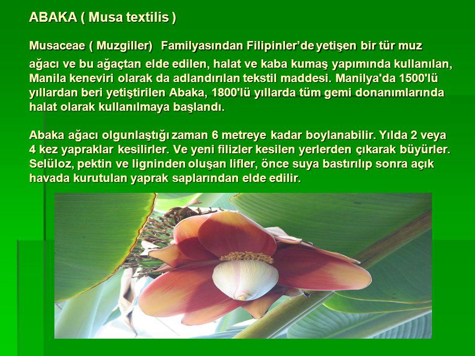 ABAKA ( Musa textilis ) Musaceae ( Muzgiller) Familyasından Filipinler'de yetişen bir tür muz ağacı ve bu ağaçtan elde edilen, halat ve kaba kumaş yapımında kullanılan, Manila keneviri olarak da adlandırılan tekstil maddesi.