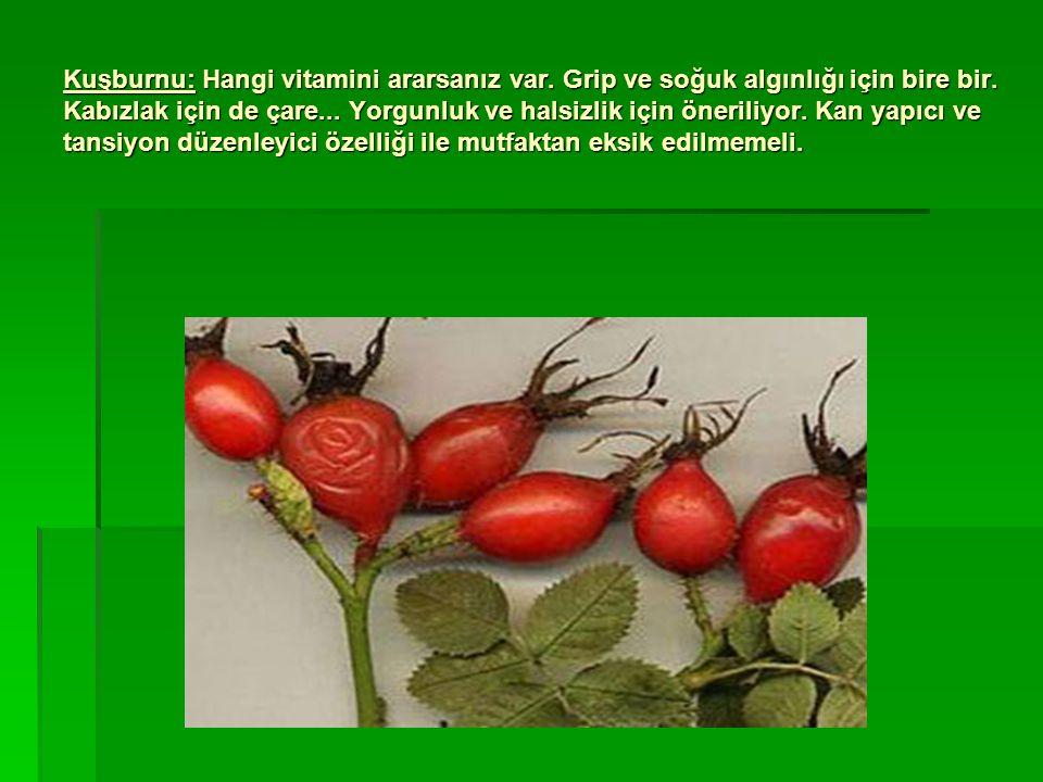 Kuşburnu: Hangi vitamini ararsanız var. Grip ve soğuk algınlığı için bire bir. Kabızlak için de çare... Yorgunluk ve halsizlik için öneriliyor. Kan ya