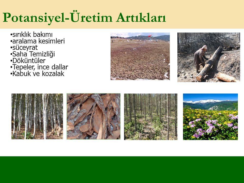 Potansiyel-Üretim Artıkları sırıklık bakımı aralama kesimleri süceyrat Saha Temizliği Döküntüler Tepeler, ince dallar Kabuk ve kozalak