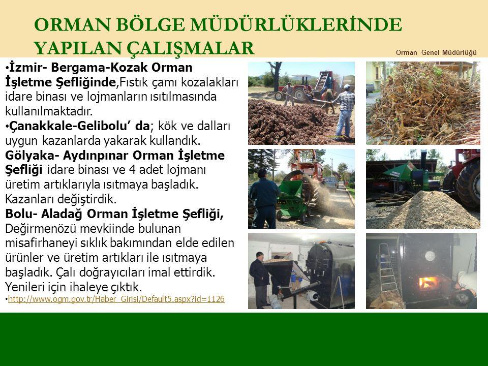 ORMAN BÖLGE MÜDÜRLÜKLERİNDE YAPILAN ÇALIŞMALAR Orman Genel Müdürlüğü İzmir- Bergama-Kozak Orman İşletme Şefliğinde,Fıstık çamı kozalakları idare binas