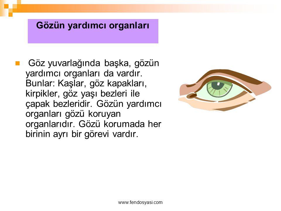 www.fendosyasi.com Göz yuvarlağında başka, gözün yardımcı organları da vardır. Bunlar: Kaşlar, göz kapakları, kirpikler, göz yaşı bezleri ile çapak be