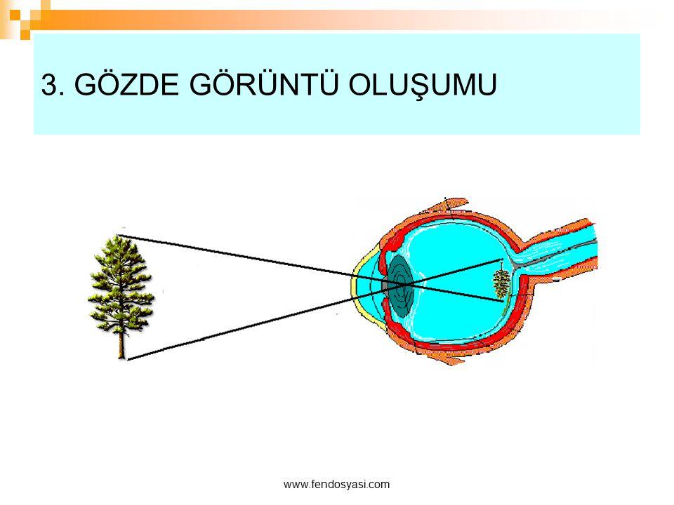 www.fendosyasi.com 3. GÖZDE GÖRÜNTÜ OLUŞUMU