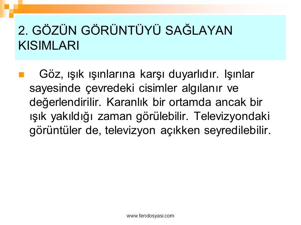 www.fendosyasi.com Gözün kesiti