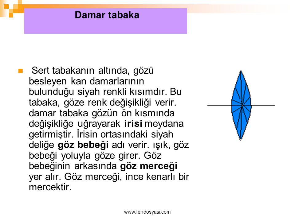 www.fendosyasi.com Sert tabakanın altında, gözü besleyen kan damarlarının bulunduğu siyah renkli kısımdır. Bu tabaka, göze renk değişikliği verir. dam