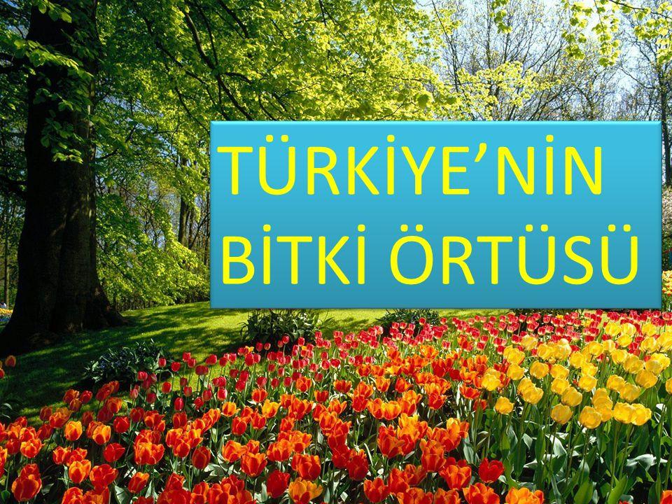 Türkiye, barındırdığı bitki türleri bakımından dünyanın en zengin ülkelerinden biridir.