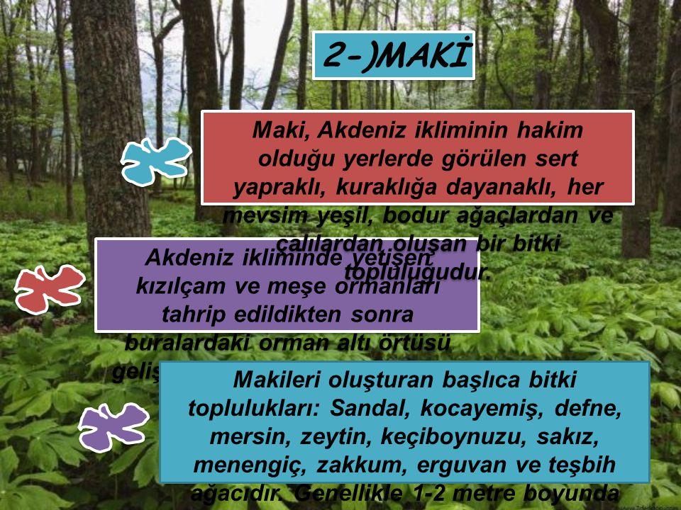 2-)MAKİ Akdeniz ikliminde yetişen kızılçam ve meşe ormanları tahrip edildikten sonra buralardaki orman altı örtüsü gelişerek makiyi oluşturmuştur. Mak