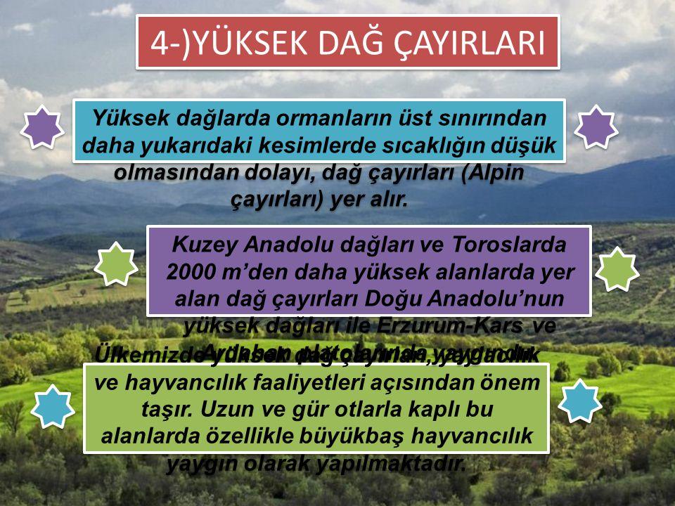 Ülkemizde yüksek dağ çayırları, yaylacılık ve hayvancılık faaliyetleri açısından önem taşır. Uzun ve gür otlarla kaplı bu alanlarda özellikle büyükbaş