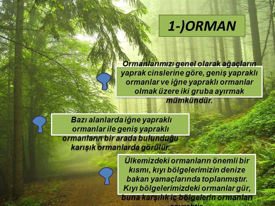 Ormanlarımızı genel olarak ağaçların yaprak cinslerine göre, geniş yapraklı ormanlar ve iğne yapraklı ormanlar olmak üzere iki gruba ayırmak mümkündür