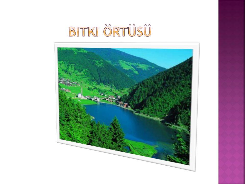  Dağların kıyıdan hemen sonra yükselmesi, uzanış yönleri ve bunların yağış getiren rüzgarlara dönük olması gibi etkenlerden dolayı Türkiye'nin ve bölgenin en yağışlı bölümüdür.