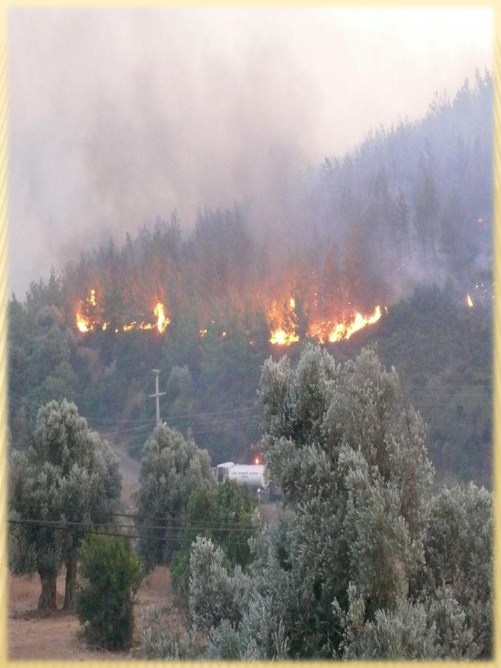 Çıkan yangın sonucu Seferihisar Serisi Ağaçlandırma Uygulama Projesi(2002) ve Seferihisar Serisi Ek-1 Ağaçlandırma Uygulama Projesinin(2004) yangında tahrip olan bölmelerinde Seferihisar Serisi (Yanık) Revizyon Projesi düzenlenmiştir.