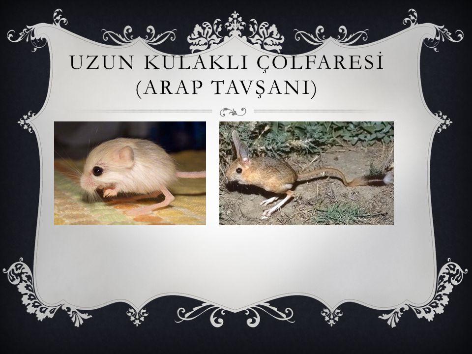HİSPANİOLAN