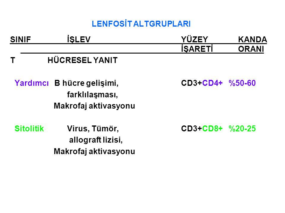 LENFOSİT ALTGRUPLARI SINIFİŞLEV YÜZEYKANDA İŞARETİORANI T HÜCRESEL YANIT Yardımcı B hücre gelişimi, CD3+CD4+ %50-60 farklılaşması, Makrofaj aktivasyon