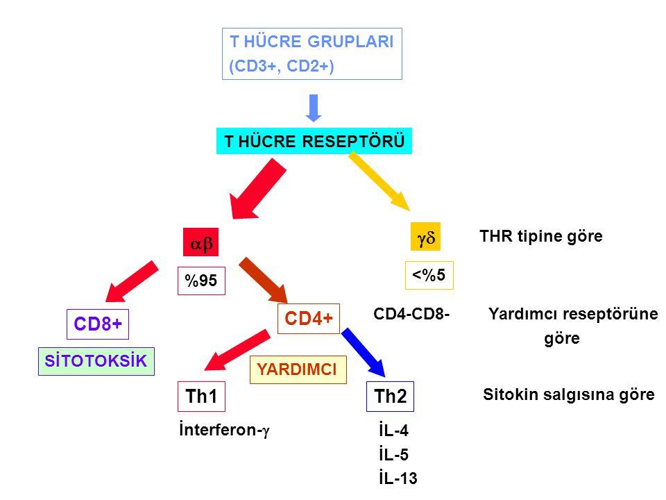 T HÜCRE GRUPLARI (CD3+, CD2+) T HÜCRE RESEPTÖRÜ   %95 <%5 CD8+ CD4+ Th1Th2 CD4-CD8- İnterferon-  İL-4 İL-5 İL-13 THR tipine göre Yardımcı reseptö