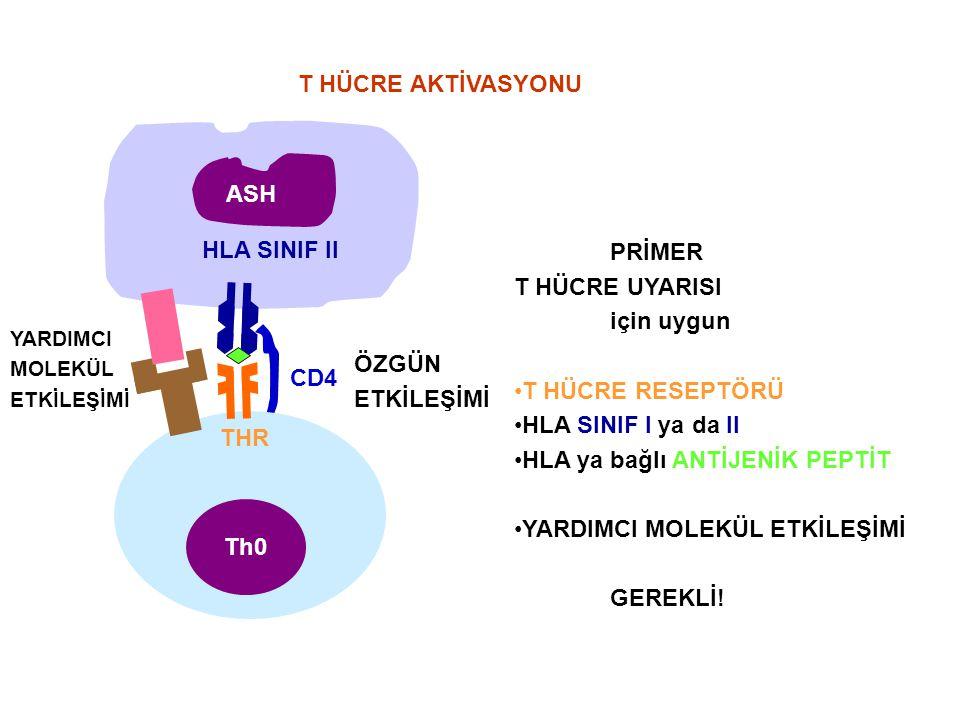 YARDIMCI MOLEKÜL ETKİLEŞİMİ CD4 THR Th0Th0 HLA SINIF II ASH PRİMER T HÜCRE UYARISI için uygun T HÜCRE RESEPTÖRÜ HLA SINIF I ya da II HLA ya bağlı ANTİ