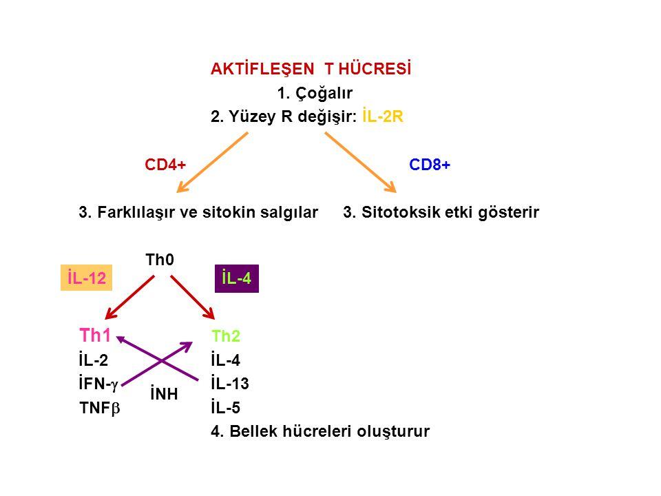 AKTİFLEŞEN T HÜCRESİ 1. Çoğalır 2. Yüzey R değişir: İL-2R CD4+ CD8+ 3. Farklılaşır ve sitokin salgılar3. Sitotoksik etki gösterir Th0 Th1 Th2 İL-2İL-4