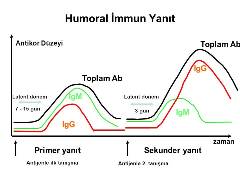Humoral İmmun Yanıt Antikor Düzeyi Primer yanıtSekunder yanıt Antijenle ilk tanışma Antijenle 2. tanışma Toplam Ab IgM IgG Latent dönem 7 - 15 gün Top