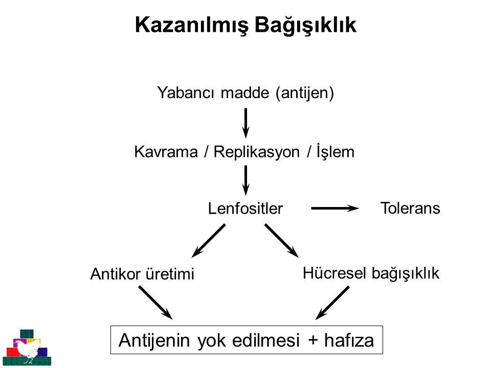 Kazanılmış Bağışıklık Yabancı madde (antijen) Kavrama / Replikasyon / İşlem Lenfositler Antijenin yok edilmesi + hafıza Hücresel bağışıklık Antikor üretimi Tolerans