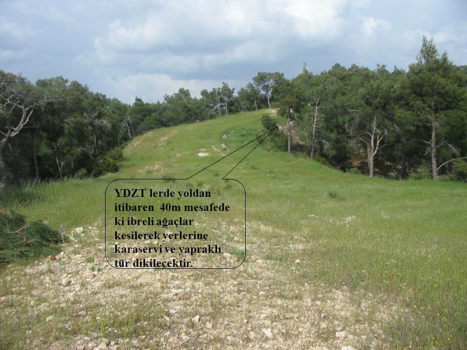 YDZT lerde yoldan itibaren 40m mesafede ki ibreli ağaçlar kesilerek yerlerine karaservi ve yapraklı tür dikilecektir.